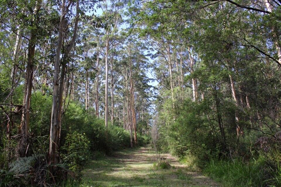karri trail2